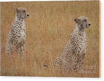 The Cheetahs Wood Print by Stephen Smith