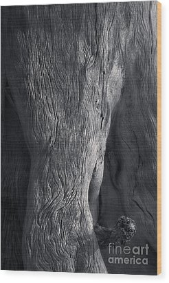 The Elephant Tree Wood Print by Royce Howland