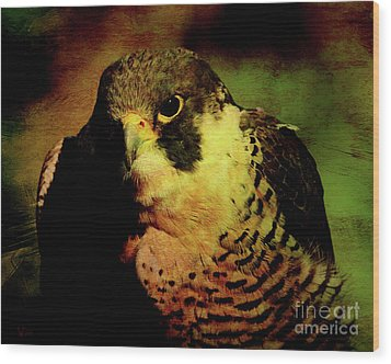 The Falcon Wood Print by Wingsdomain Art and Photography