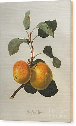 The Kerry Pippin Wood Print by William Hooker