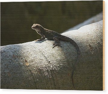 The Lone Lizard Wood Print by Amanda Vouglas