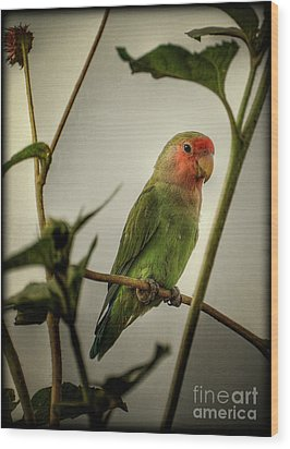 The Lovebird  Wood Print by Saija  Lehtonen