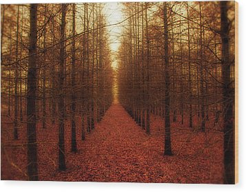 The Red Forest Wood Print by Amy Tyler
