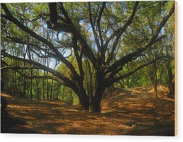 The Sacred Oak Wood Print by David Lee Thompson