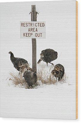 The Turkey Patrol Wood Print by Mike Dawson
