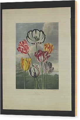 Thornton - Tulips Wood Print by Pat Kempton