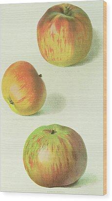 Three Apples Wood Print by English School