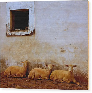 Three Wise Sheep Wood Print by Maggie McLaughlin