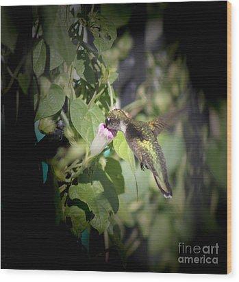 Through Garden Gates  Wood Print by Cathy  Beharriell