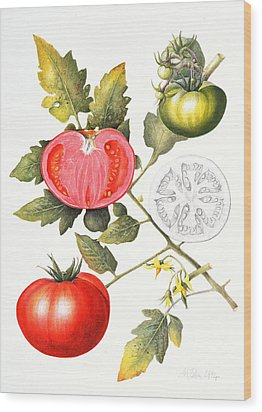 Tomatoes Wood Print by Margaret Ann Eden