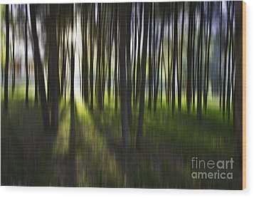 Tree Abstract Wood Print by Avalon Fine Art Photography