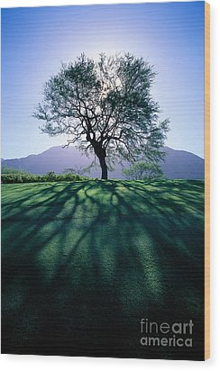 Tree On Grassy Knoll Wood Print by Carl Shaneff - Printscapes
