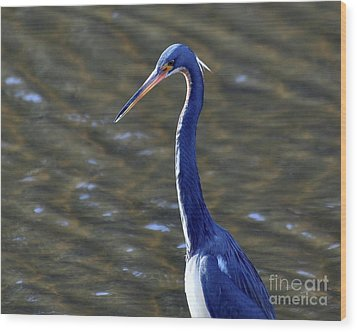 Tricolored Heron Pose Wood Print by Al Powell Photography USA