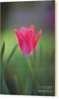 Tulip Amongst Wood Print by Mike Reid