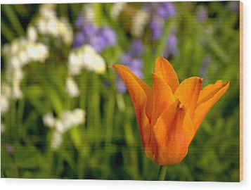 Tulip And Friends L Wood Print by Andy Smy