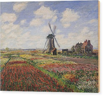 Tulip Fields With The Rijnsburg Windmill Wood Print by Claude Monet
