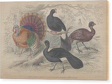 Turkeys Wood Print by Oliver Goldsmith