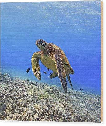Turtle Wood Print by Chris Stankis