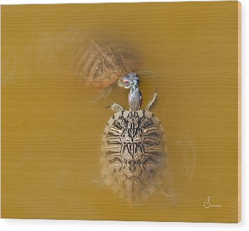 Turtle Kiss Wood Print by Sally Mitchell