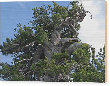 Twisted And Gnarled Bristlecone Pine Tree Trunk Above Crater Lake - Oregon Wood Print by Christine Till