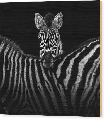 Two Zebras In Black And White Wood Print by Lukas Holas