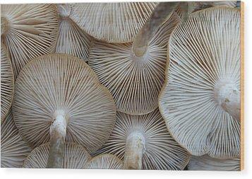 Underside Of Mushrooms Wood Print by Greg Adams Photography