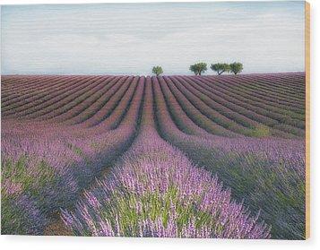 Velours De Lavender Wood Print by Margarita Chernilova