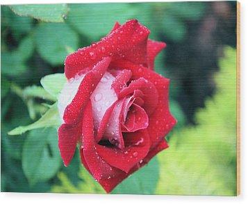Very Dewy Rose Wood Print by Kristin Elmquist