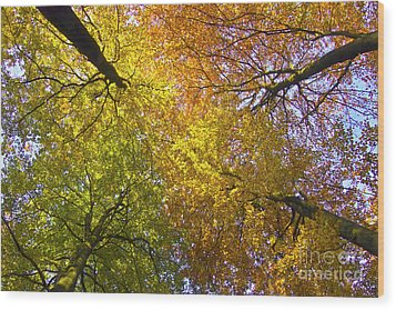 View To The Top Of Beech Trees Wood Print by Heiko Koehrer-Wagner