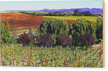 Vineyard 5 Wood Print by Xueling Zou