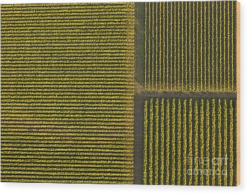 Vineyard From Above Wood Print by Diane Diederich