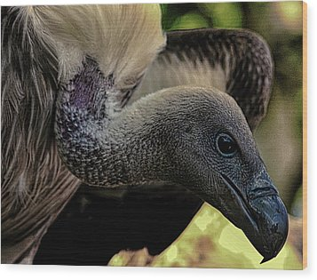 Vulture Wood Print by Martin Newman