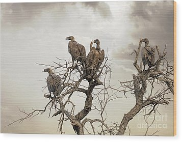 Vultures In A Dead Tree.  Wood Print by Jane Rix