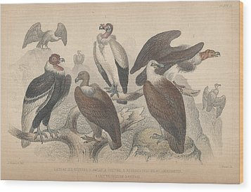 Vultures Wood Print by Oliver Goldsmith