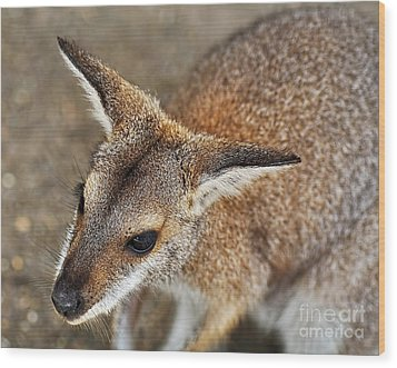 Wallaby Portrait Wood Print by Kaye Menner