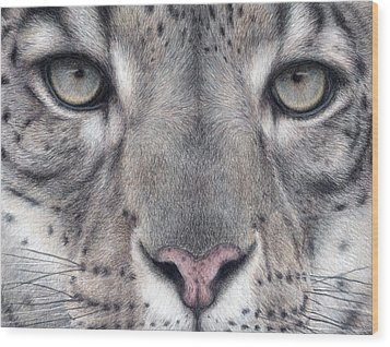 Watching You...snow Leopard Wood Print by Pat Erickson