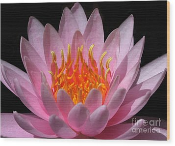 Water Lily On Fire Wood Print by Sabrina L Ryan
