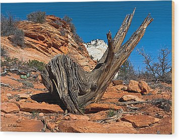 Weathered Check Wood Print by Christopher Holmes