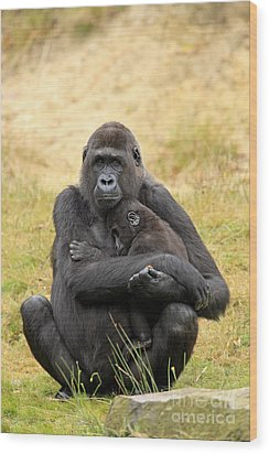 Western Gorilla And Young Wood Print by Jurgen & Christine Sohns/FLPA