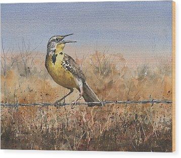 Western Meadowlark Wood Print by Sam Sidders