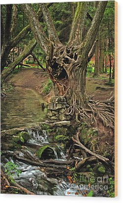 Where The Ents Are Wood Print by Angel  Tarantella