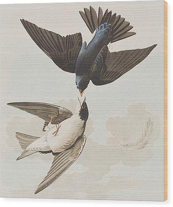 White-bellied Swallow Wood Print by John James Audubon