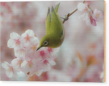 White-eye And Cherry Blossoms Wood Print by I love Photo and Apple.