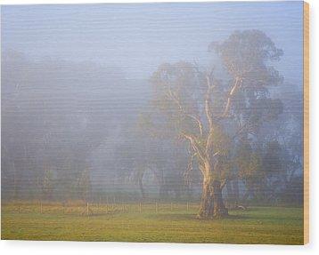White Gum Morning Wood Print by Mike  Dawson