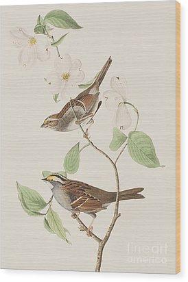 White Throated Sparrow Wood Print by John James Audubon
