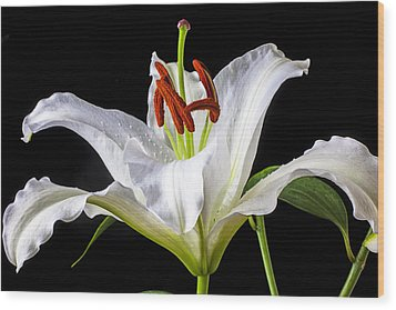 White Tiger Lily Still Life Wood Print by Garry Gay