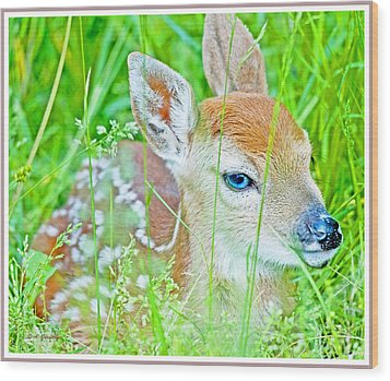 Wood Print featuring the photograph Whitetailed Deer Fawn by A Gurmankin