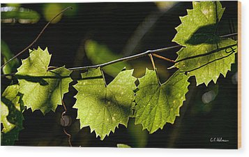 Wild Grape Leaves Wood Print by Christopher Holmes