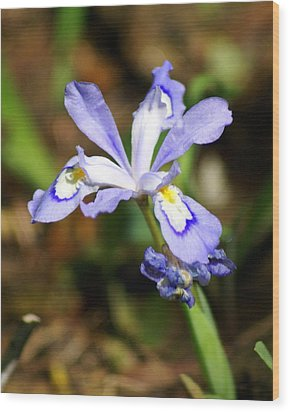 Wild Iris Wood Print by Marty Koch