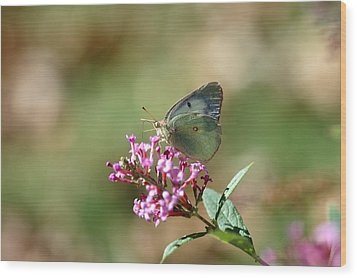 Wings And Petals Wood Print by Betty LaRue